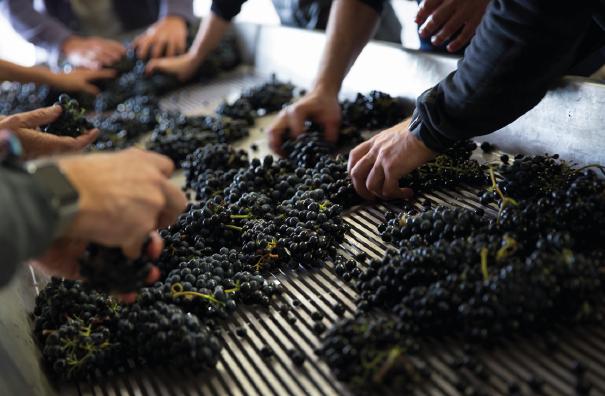 vinsobres organic winemaker