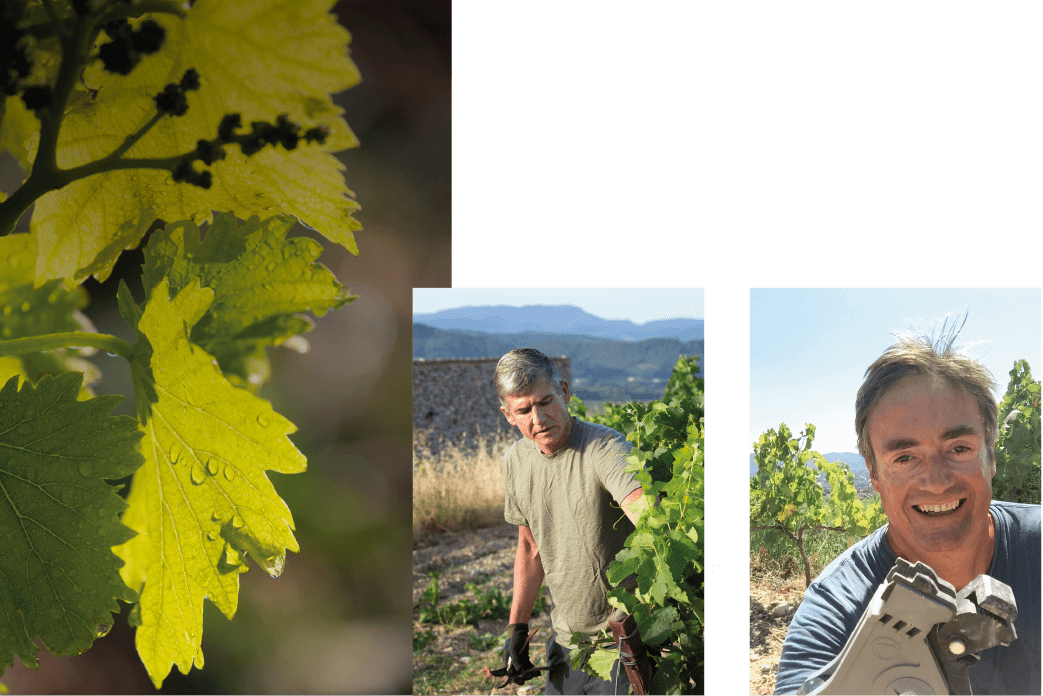 Organic Winemakers in Rhone Valley