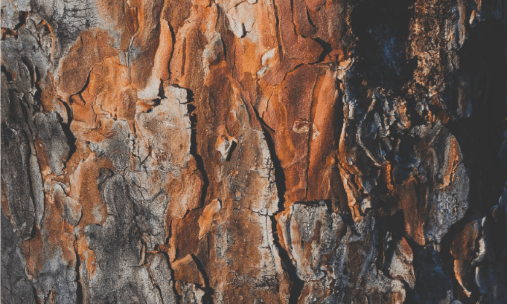 Serre-besson-degustation-vinsibre-2018-wood