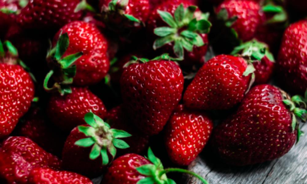 Serre-besson-degustation-vinsibre-2019-fraise-strawberries